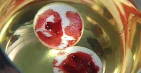 """Ostia consacrata cade a terra e sanguina. Le analisi: """"E' un pezzo di cuore!"""". Ecco dove è accaduto il miracolo"""
